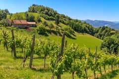 Styrian Tuscany Vineyard, Styria, Austria Royalty Free Stock Image
