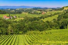 Styrian Tuscany Vineyard, Styria, Austria Stock Image