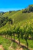 Styrian Tuscany winnica, Styria, Austria zdjęcia royalty free