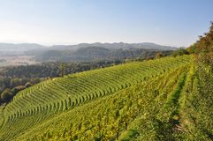 Styrian vineyard Stock Photo