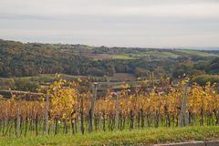 Styrian vineyards Royalty Free Stock Image