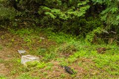 Styrofoam container and other debris on the ground. Large broken styrofoam container and other debris scattered on the ground in a woodland park stock photos