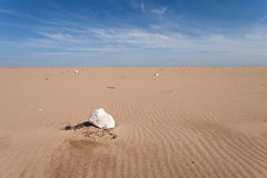Styrofoam floats for fishing nets thrown on the sea shore. stock photos
