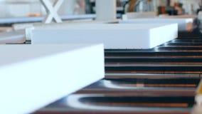 Styrofoam na konwejer linii, produkci wyposażenie przy rośliną, zbiory
