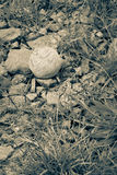 Styroschaumball mit weißer natürlicher Seilschnur verlor in den Sumpfgebieten Stockbilder