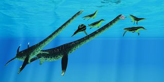 Styxosaurus nimmt Dolichorhynchops in Angriff Stockbild
