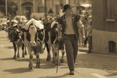 Suíça de Blonay da descida do gado Imagens de Stock Royalty Free