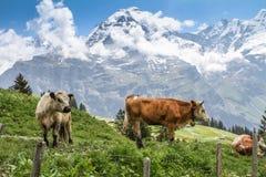 Suíça, os cumes, o vale de Lauterbrunnen Imagem de Stock