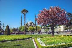Sułtanu Ahmed Meczetowy Błękitny meczet Fotografia Stock