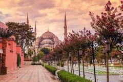 Sułtanu Ahmet meczet, - (Błękitny meczet Istanbuł, Turcja) Obraz Stock