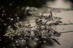 Su acqua Fotografia Stock
