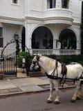 Su caballo ha llegado Imagen de archivo libre de regalías