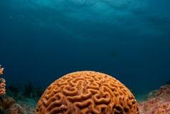 Su cerebro en el equipo de submarinismo Foto de archivo libre de regalías