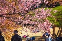 ¡Su estación de primavera! Imagenes de archivo