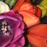 Su-fine del fiore Immagine Stock