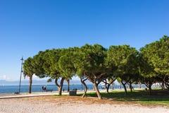 Su Siccu pinewood, Cagliari, Sardinia Royalty Free Stock Images