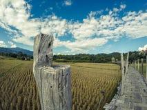 A SU Tong Pae Bridge, a ponte de bambu da fé através do arroz coloca na província de Mae Hong Son, Tailândia do norte fotos de stock