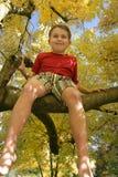 Su un albero Fotografia Stock