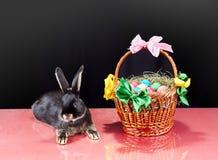 Su un coniglietto del fondo e su un canestro neri di Pasqua con la riflessione su vetro Fotografie Stock