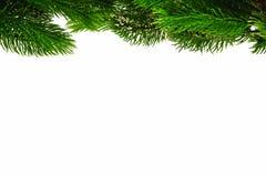 Su un fondo bianco sono i rami verdi decorativi dell'abete alla cima, spazio inferiore per firmare fotografia stock
