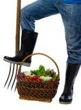 Su un fondo di bianco le verdure hanno raccolto nel canestro Immagine Stock Libera da Diritti