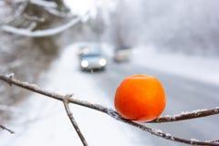 Su una strada dell'inverno un'automobile sta guidando e nella priorità alta un'arancia su un ramo dei cervi, della neve e del fre Immagine Stock Libera da Diritti