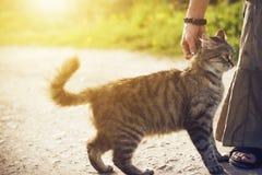 Su una strada una donna che segna un gatto senza tetto lanuginoso fotografia stock libera da diritti