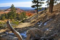 Su una traccia in Bryce Canyon NP Fotografia Stock