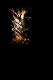 Sua Maestà l'ananas Fotografie Stock Libere da Diritti