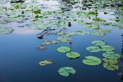 Suan Luang Rama IX公园自然亭子地标  图库摄影
