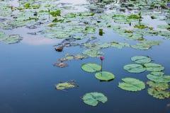 Suan Luang Rama IX公园自然亭子地标  免版税库存图片