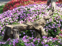 Suan Luang Rama 9 Park - Wood bench with impatiens. Hand hewn wood bench at Suan Luang Rama 9 Park - Bangkok with impatiens and dove Royalty Free Stock Photography