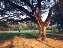Suan Rod Faja Zdjęcia Royalty Free