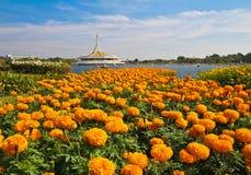 Suanluang R9 免版税库存图片