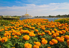Suanluang R9 Royalty Free Stock Image