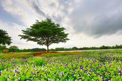 Suanluangrama9 Стоковые Фотографии RF