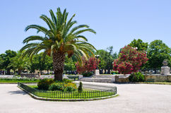 Suare in with palm, Greece. Suare in old Corfu town with palm, Greece Royalty Free Stock Photos