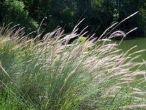 Suave vio la hierba Imágenes de archivo libres de regalías