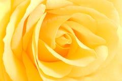 Suavemente amarillee color de rosa en la visión cercana foto de archivo