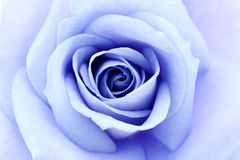 Suavemente el azul se levantó Fotografía de archivo libre de regalías