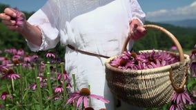 Suavemente flores del rasgón