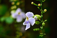 Suavidad dulce de las orquídeas Fondo de la flor Ciérrese encima de orquídea rosada en fondo verde Flor orquídeas, orquídeas tail Imagen de archivo