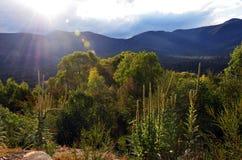 Sub alpine mountain woodland at Tidbinbilla, Australia. Mountains, sub alpine woodland and sun flare in Tidbinbilla Nature Reserve, near Canberra, Australian stock photo