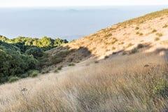 Sub-Alpine weide op zijheuvel in de zomer Royalty-vrije Stock Foto's