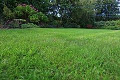 Sub da vontade do gramado do jardim no fundo Imagem de Stock Royalty Free