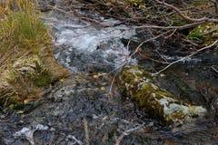 Sub-polar mountains creek Royalty Free Stock Photos