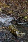Sub-polar mountains creek Stock Image