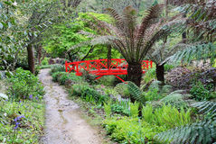 Sub Tropical Garden Royalty Free Stock Images