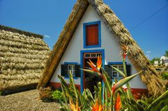Sub tropical straw huts with bird of paradise flower. A typical hut in Santana Madeira, with bird of paradise flowers growing outdoors stock photography
