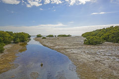 Sub-Tropical Stream entering into an ocean bay at Low Tide Royalty Free Stock Photos
